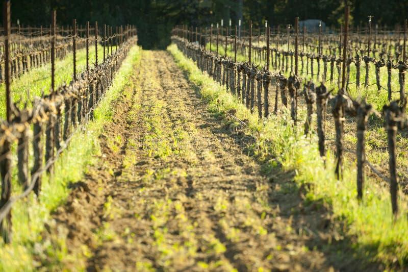 耕种的葡萄葡萄园,加利福尼亚葡萄酒国家 库存照片
