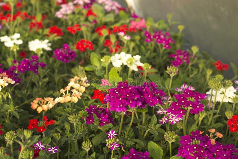 耕种花自温室 免版税库存照片