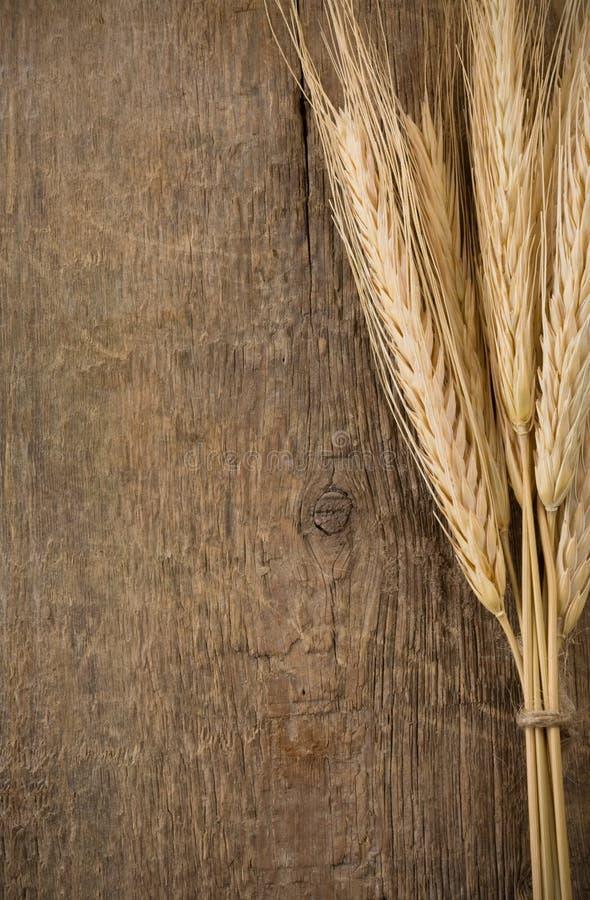 耳朵峰值麦子木头 免版税库存照片