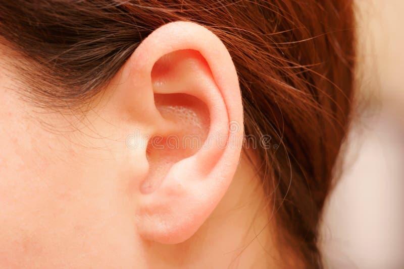 耳朵 免版税库存图片