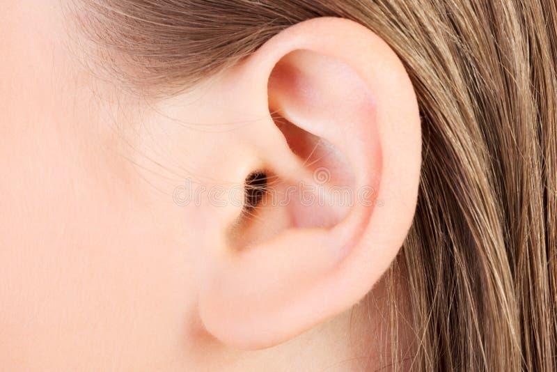 耳朵 库存照片