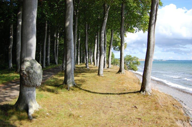 耶尔姆岛丹麦 库存图片