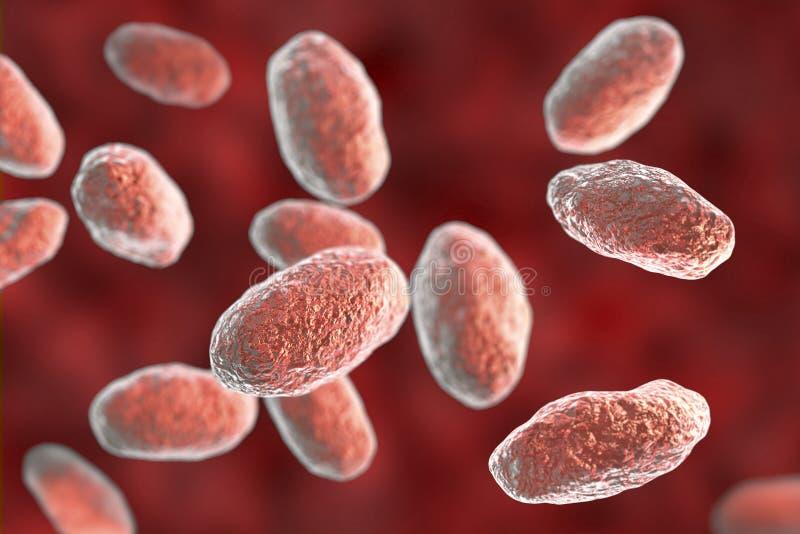 耶尔森氏假结核病细菌. 病原生物, 医疗.图片
