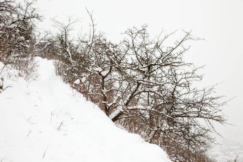 耶拿冬天视图 免版税图库摄影