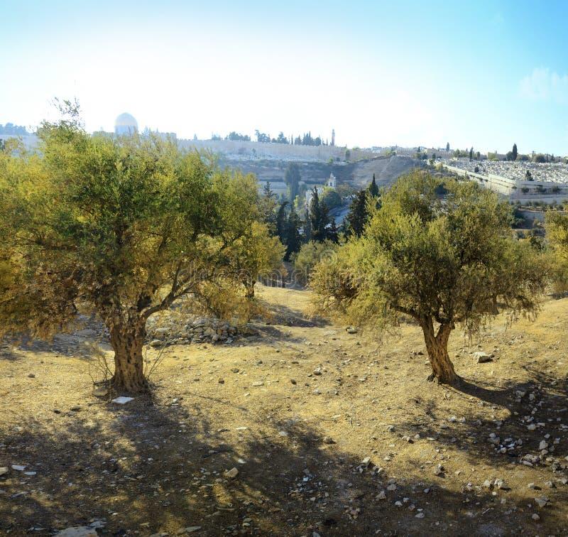 耶路撒冷看法从橄榄山的 库存照片