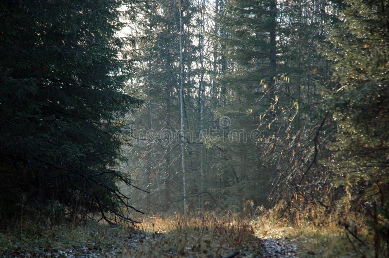 聋西伯利亚taiga 免版税图库摄影
