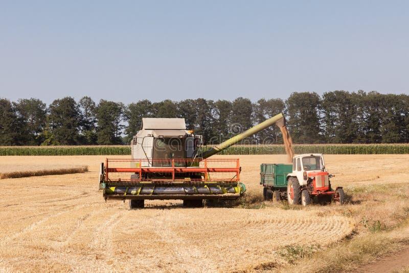 联合收获麦子和卸载五谷入牵引车拖车 免版税库存照片