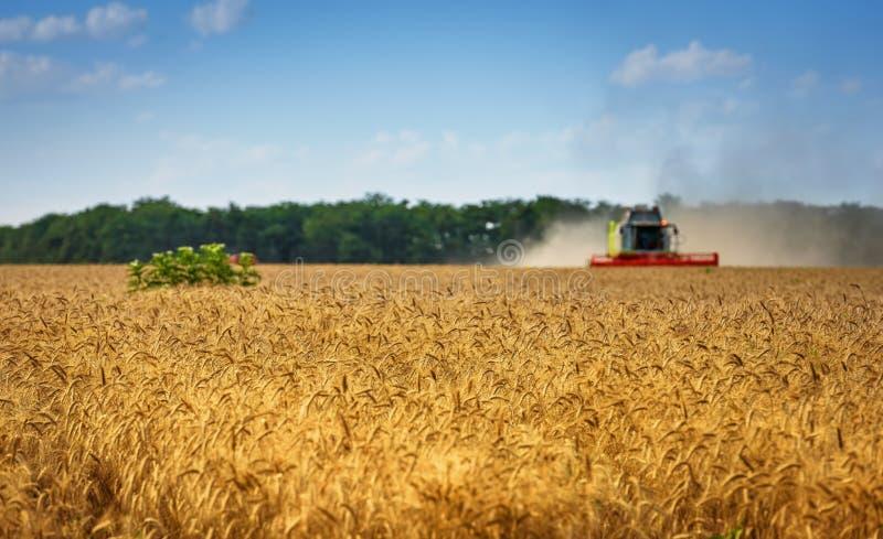 联合收获麦子在晴朗的夏日 图库摄影