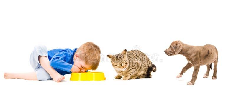 联合食物男孩、猫和小狗 免版税库存图片