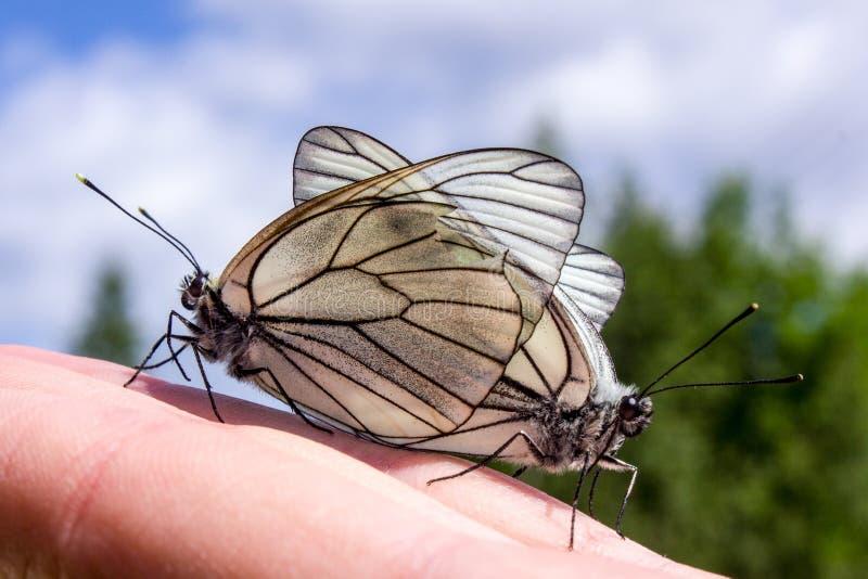 联接在手上的蝴蝶 免版税库存图片