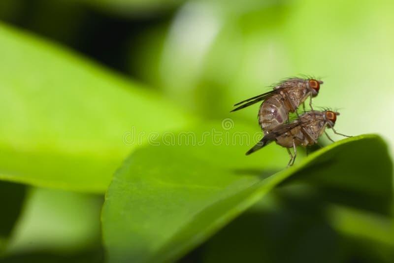 联接在绿色叶子的昆虫 库存图片