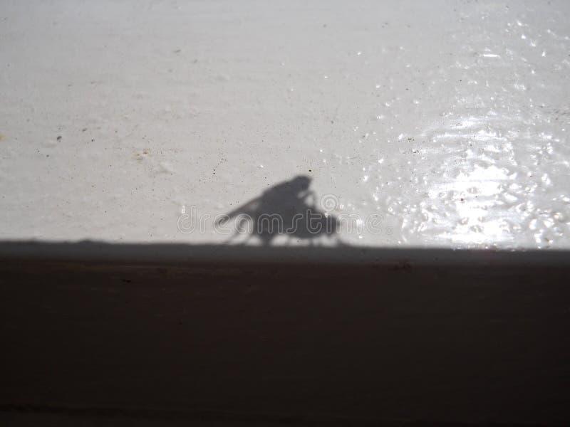 联接的flys的阴影 库存图片