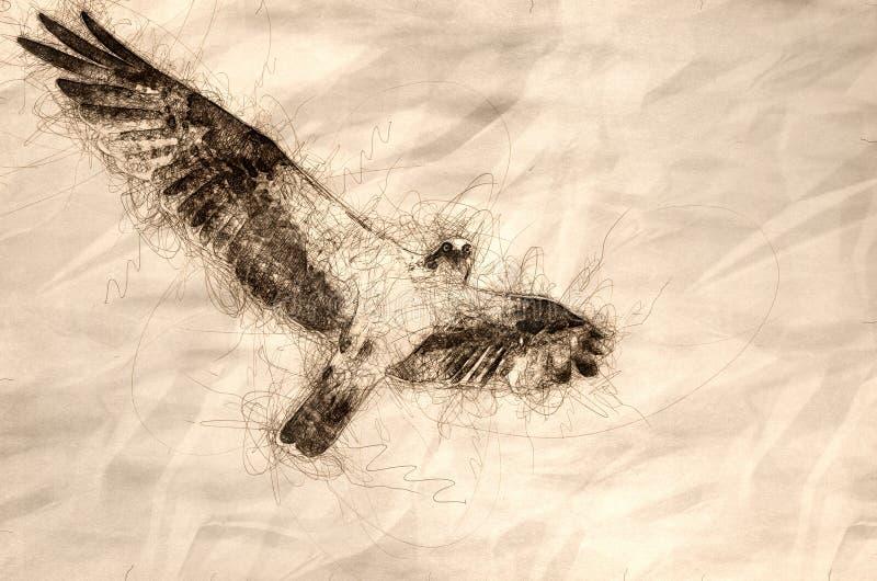 联系目光接触的白鹭的羽毛的剪影,当飞行在天空蔚蓝时 库存例证
