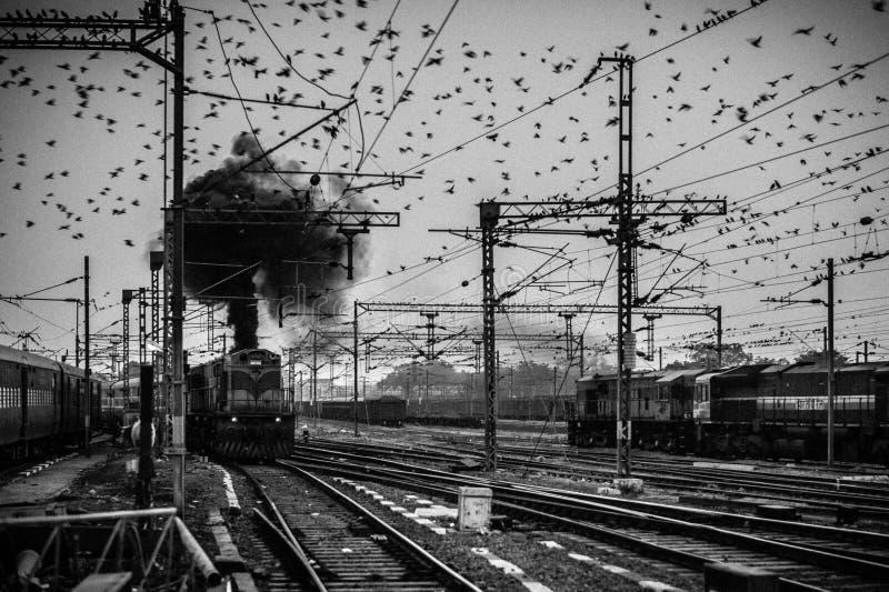 聚集在顶上的输电线附近的鸟在阿格拉驻扎火车站 免版税图库摄影