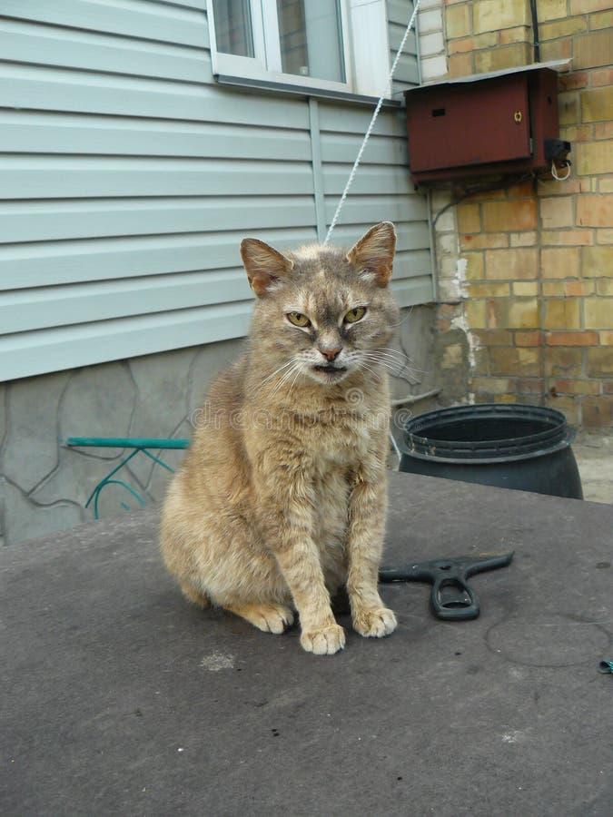 聪明的猫坐桌 免版税图库摄影