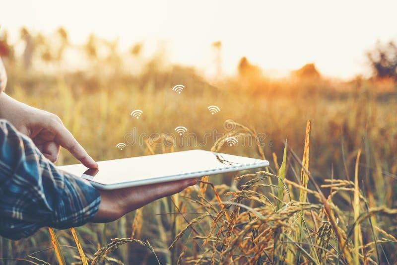 聪明的种田的农业技术和使用研究片剂的有机农业妇女和学习米的发展 免版税库存图片