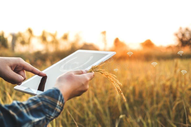 聪明的种田的农业技术和使用研究片剂的有机农业妇女和学习米的发展 免版税库存照片