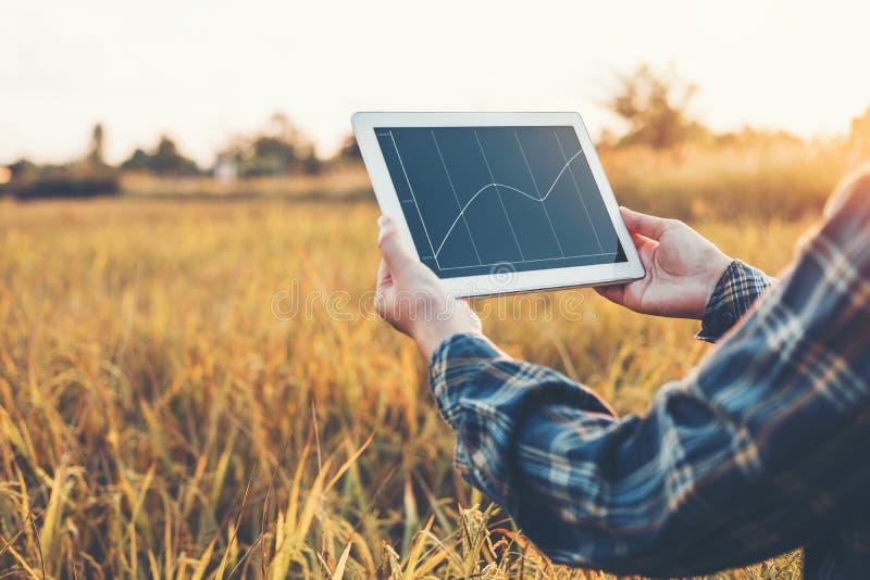 聪明的种田的农业技术和有机农业Wo 免版税库存照片