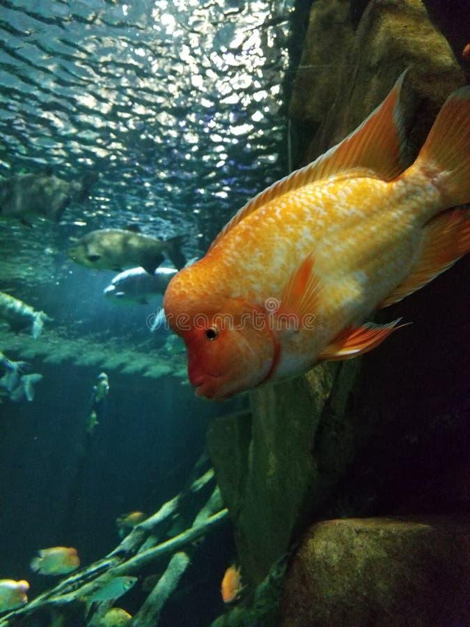 聪明的鱼 免版税图库摄影