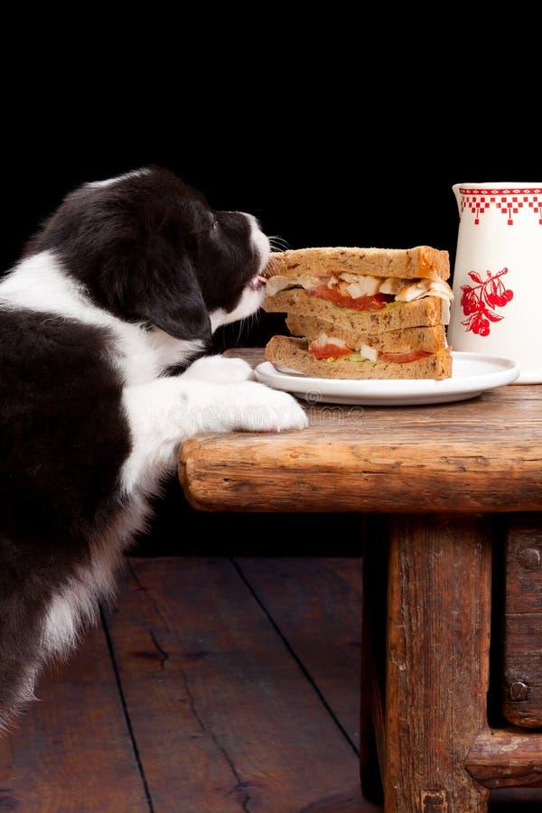 聪明的滑稽的小狗 免版税库存照片