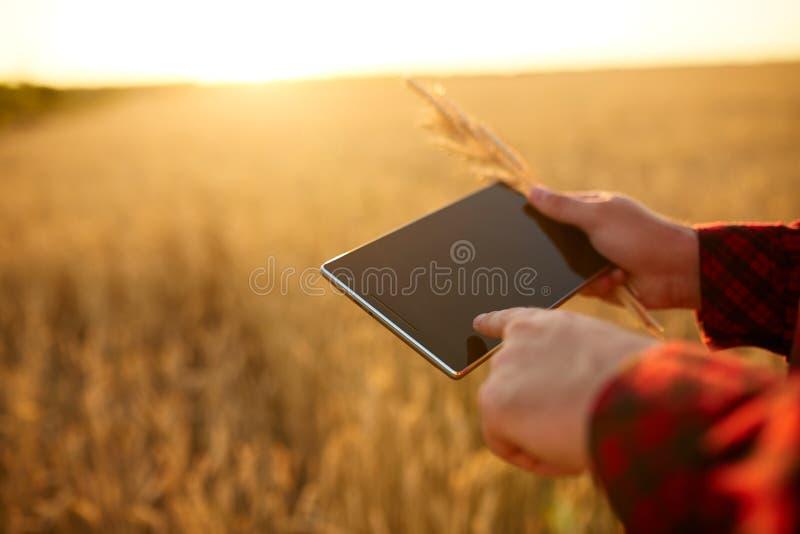 聪明种田使用在农业的现代技术 供以人员有数字式片剂计算机的农艺师农夫在麦子 免版税库存照片