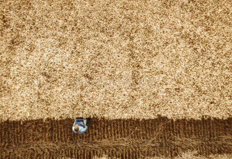 聪明种田使用在农业的现代技术 库存照片