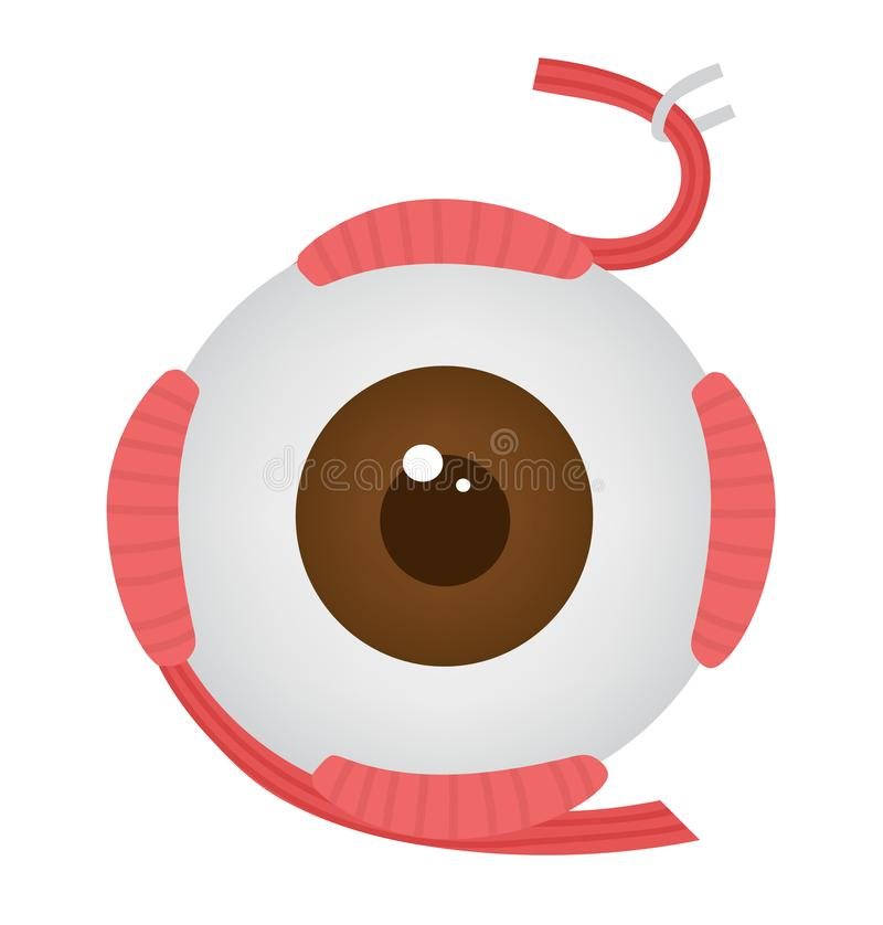 肉眼的肌肉 库存例证