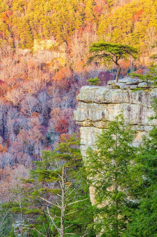 肉食休息处,秋天小河秋天国家公园,田纳西 库存照片