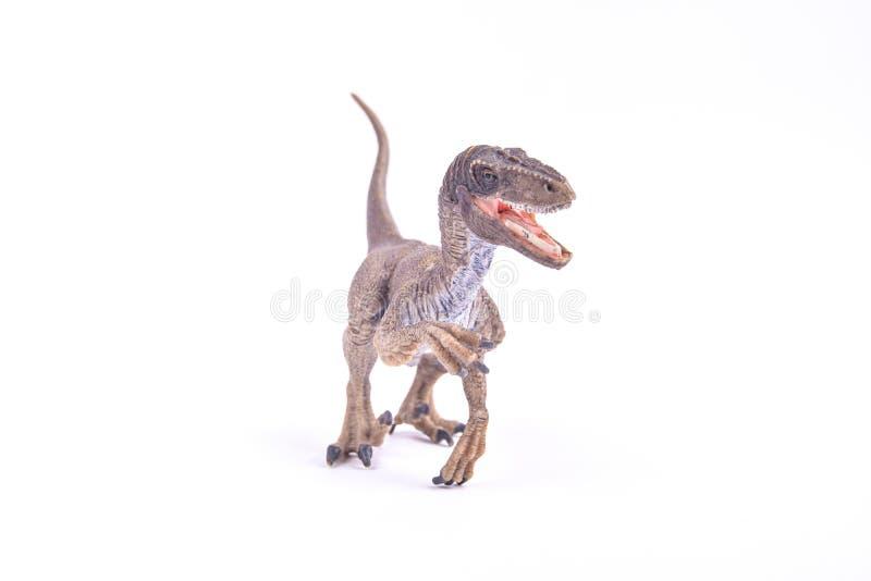 肉食鸟恐龙 免版税库存图片
