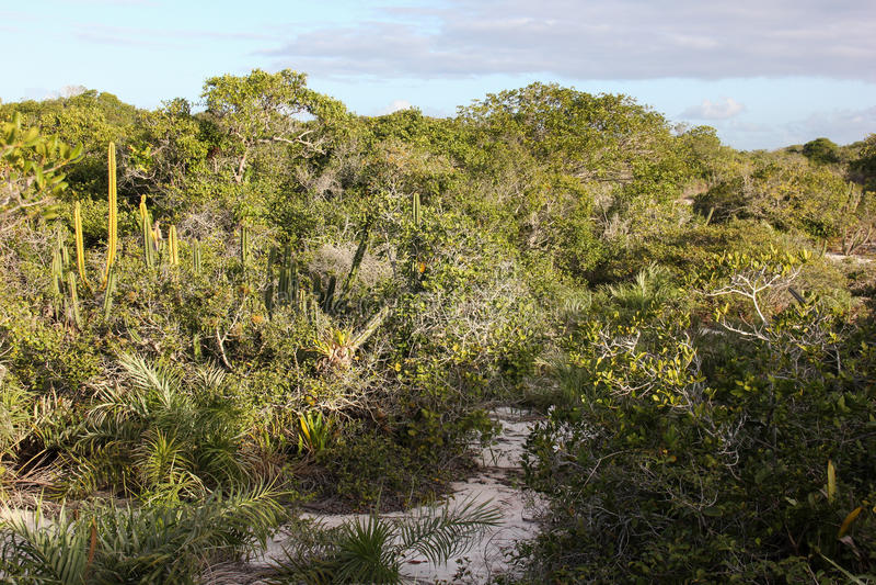 肋前缘国家公园在里约热内卢做Sol 库存图片