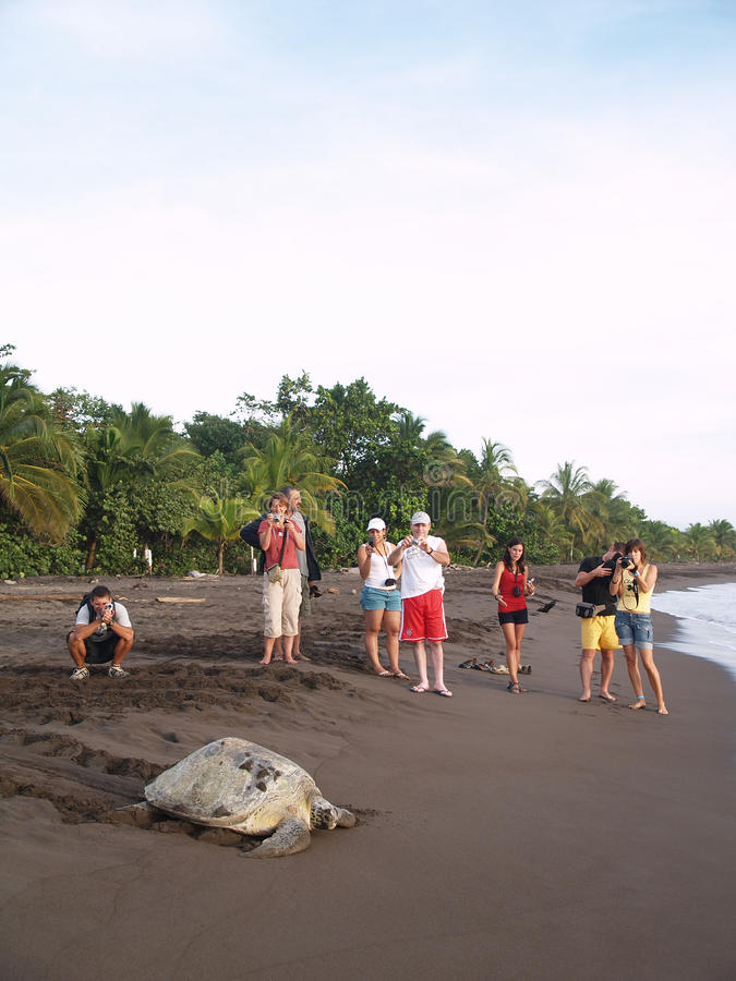 肋前缘国家公园rica海运tortuguero乌龟 库存照片