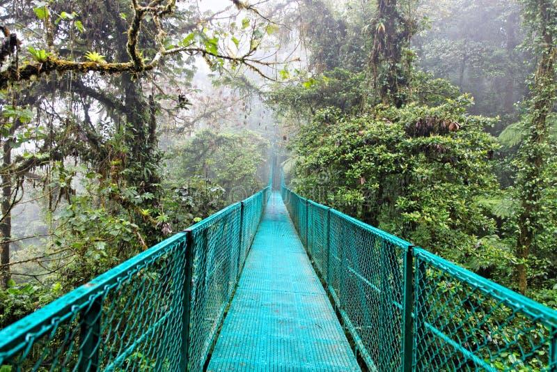 肋前缘森林雨rica 免版税图库摄影