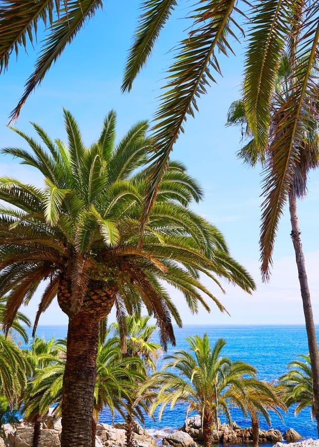 肋前缘Brava海滩略雷特德马尔卡塔龙尼亚西班牙 库存图片