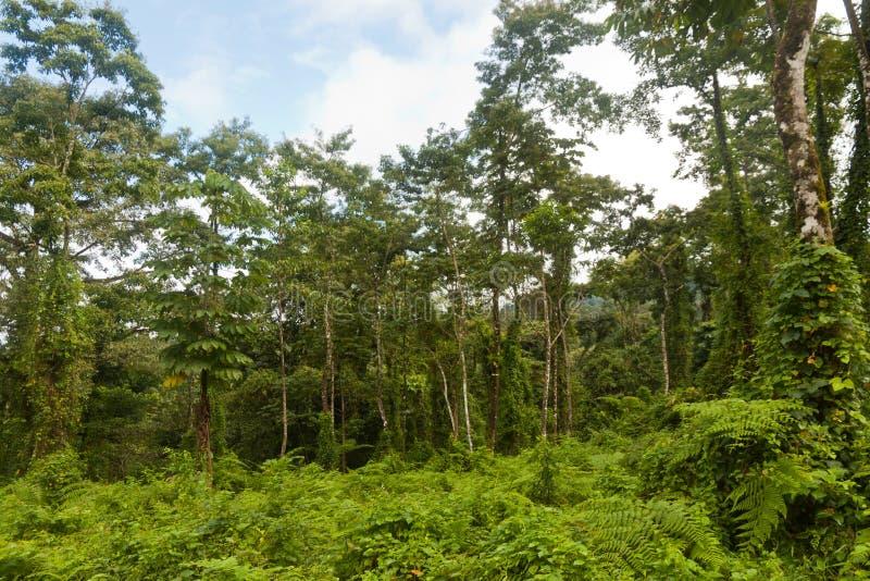 肋前缘Ricas密林和森林野生生物 库存图片
