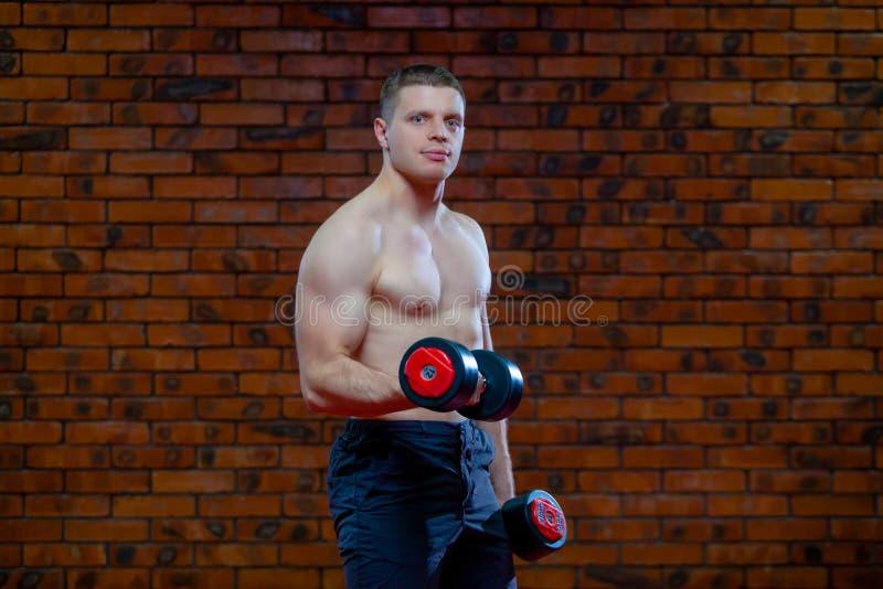 肌肉人运作的做行使与哑铃,在红砖墙壁背景的强的男性赤裸躯干吸收  库存图片