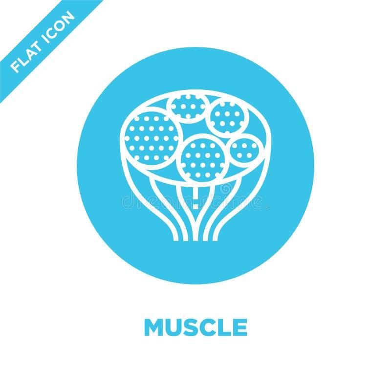肌肉从人体器官汇集的象传染媒介 稀薄的线肌肉概述象传染媒介例证 r 皇族释放例证