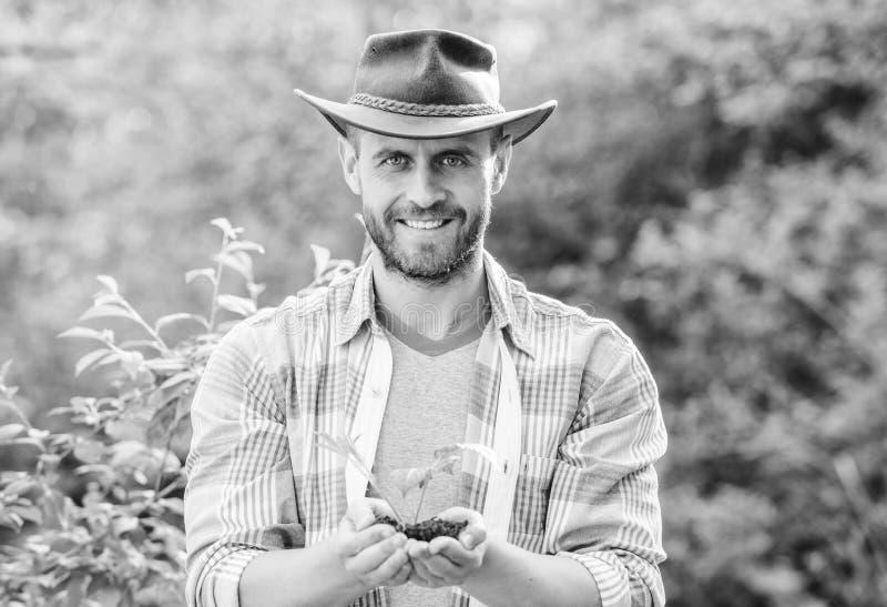 肌肉大农场人在牛仔帽关心植物中 E r E Eco?? 种田和 库存照片