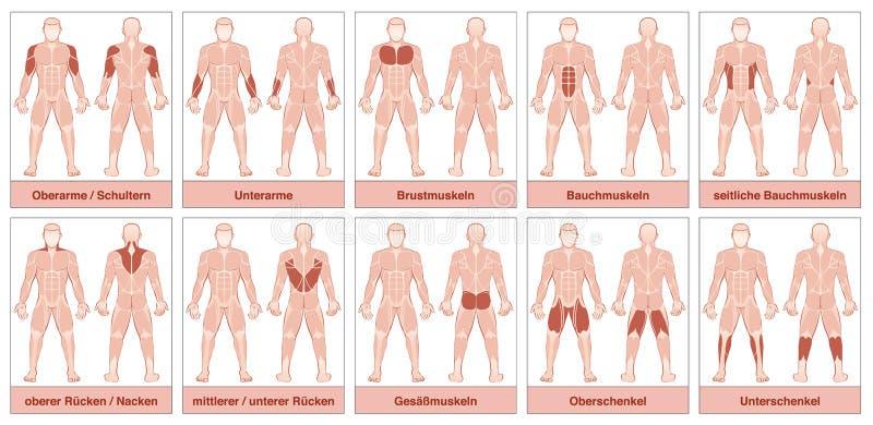 肌肉编组德国名字图 向量例证