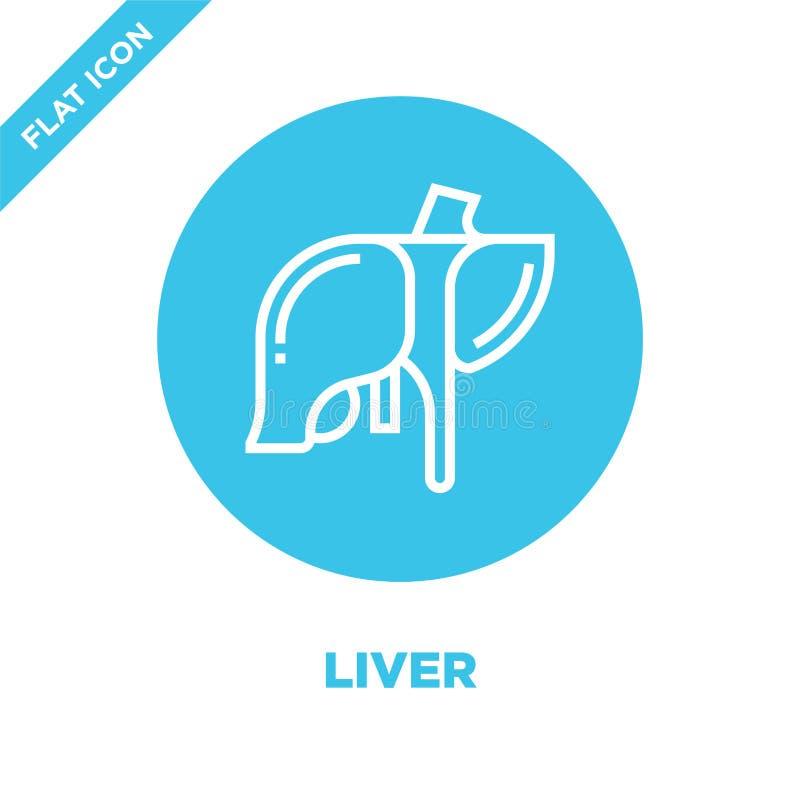 肝脏从人体器官汇集的象传染媒介 稀薄的线肝脏概述象传染媒介例证 r 向量例证