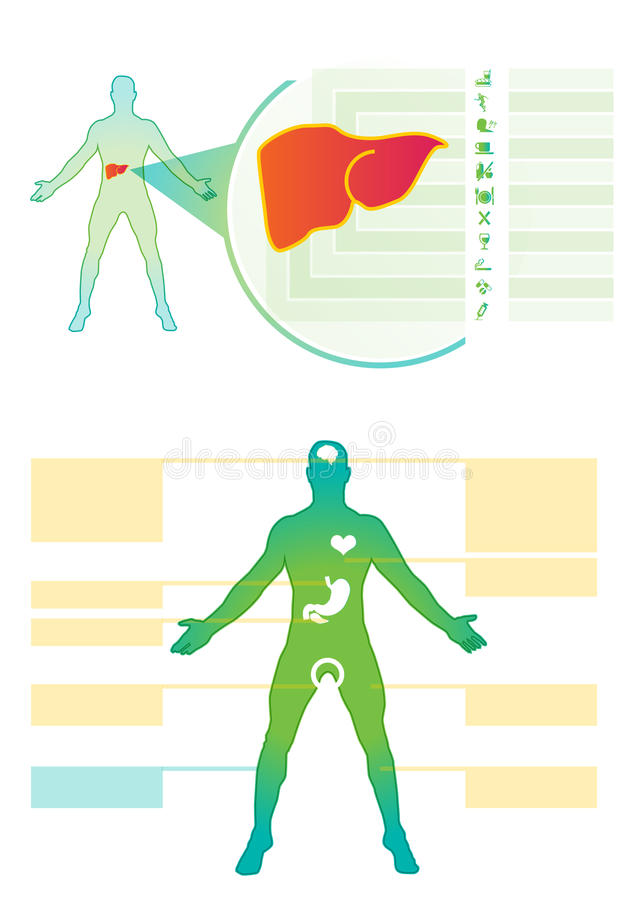 肝脏医疗信息图表 医疗vectorinfo图表 库存例证