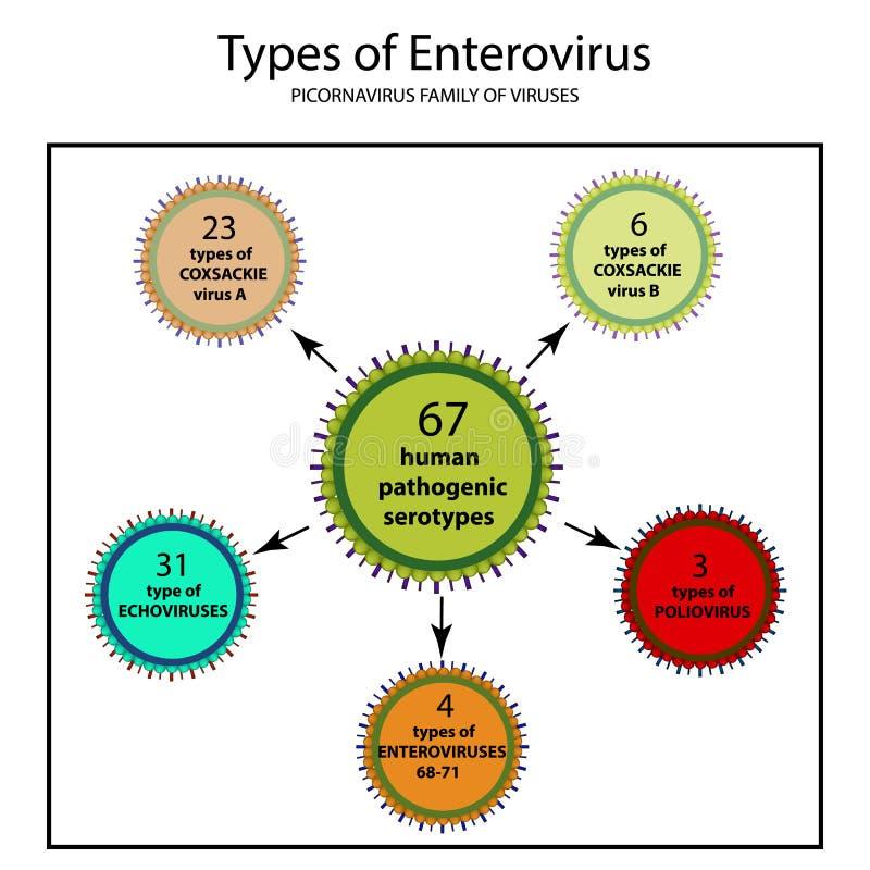 肠道病毒的类型 Coxsackie病毒A和B,小儿麻痹症, ECHO病毒, 向量例证