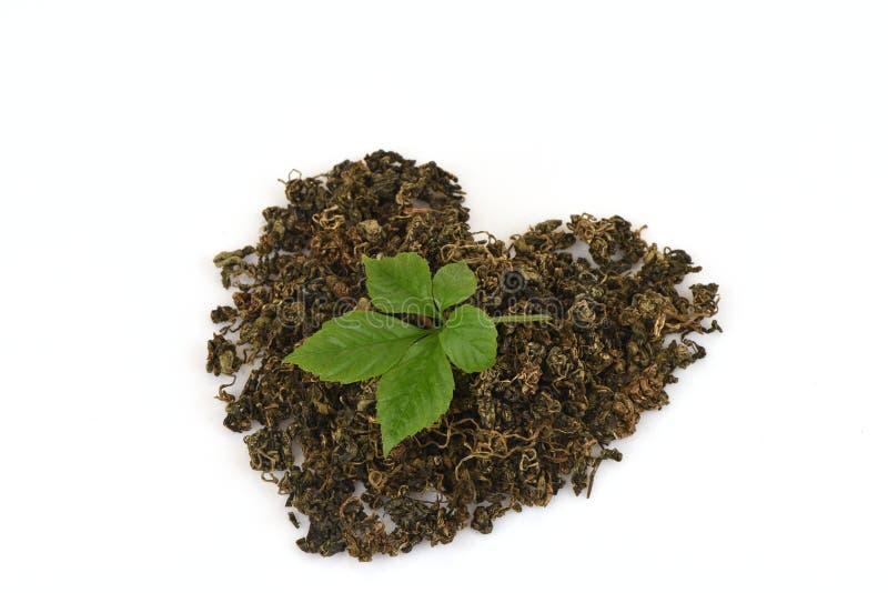 绞股兰中国名字Gynostemma pentaphyllum Thunb干燥的Makino和叶子在心脏形状安排了 免版税库存照片