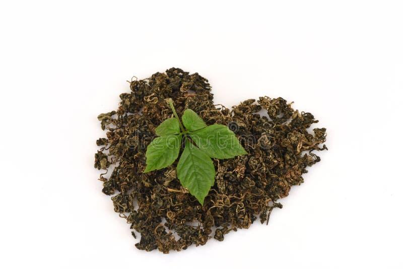 绞股兰中国名字Gynostemma pentaphyllum Thunb干燥的Makino和叶子在心脏形状安排了 库存图片