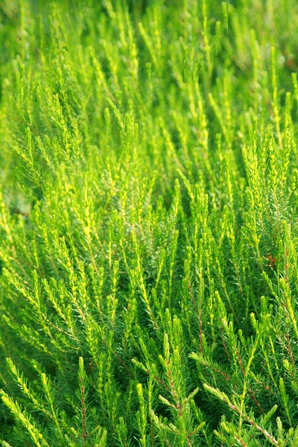 肥沃绿色植被 库存图片