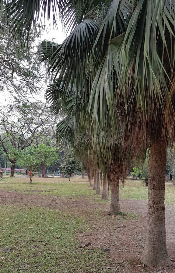 肥满树 免版税库存照片