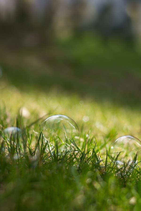 肥皂泡特写镜头在草的 免版税库存图片