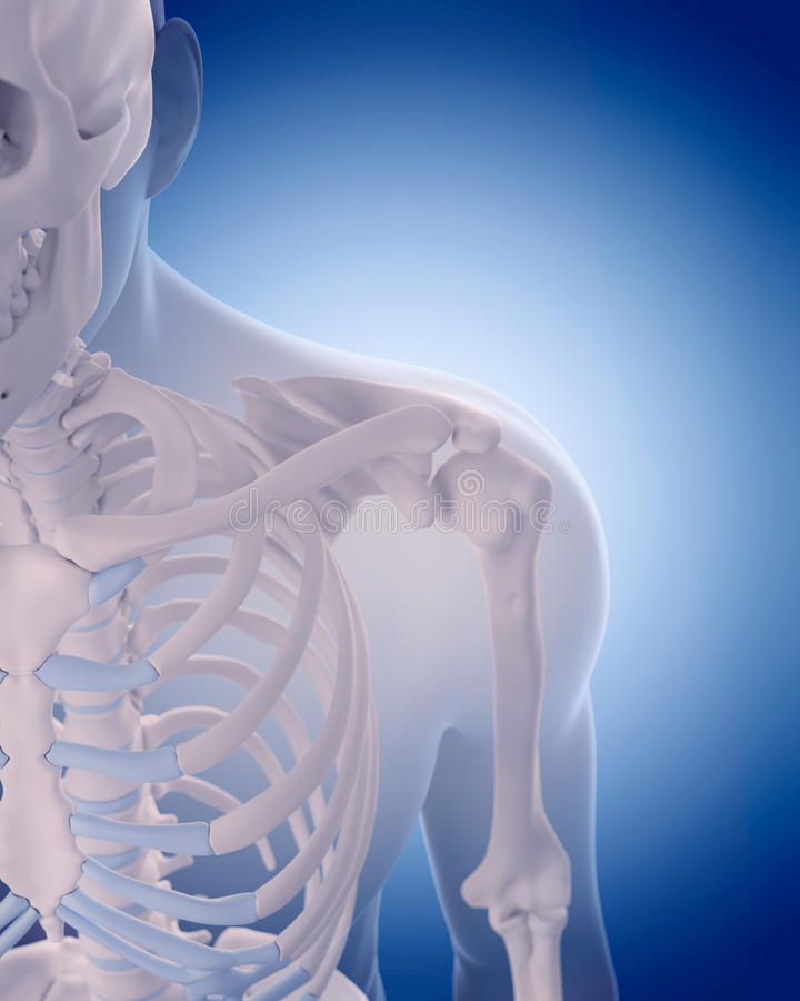 肩膀的骨头 向量例证