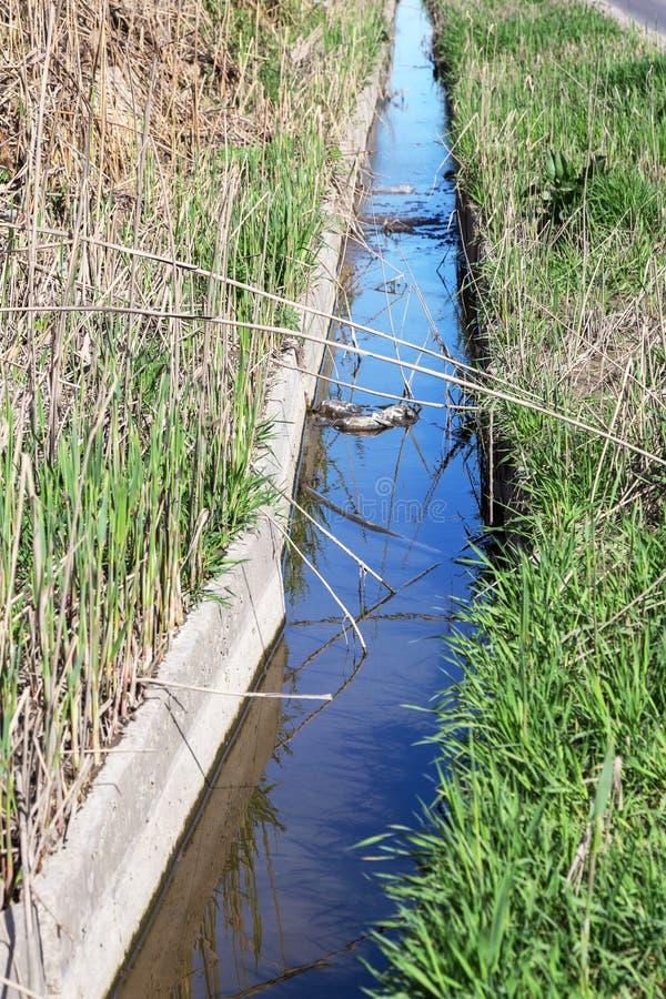 肮脏的污水和家庭在小河,灌渠原因迅速增长说废话海藻 绿色附注污染水 生态PR 免版税图库摄影