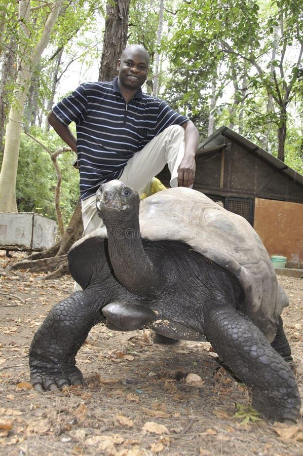 肯尼亚:站立在一只巨型乌龟后的黑人在哈勒公园 免版税库存照片