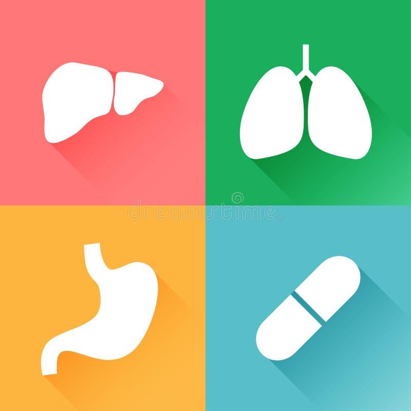 肺,肝脏,胃,胶囊 向量例证